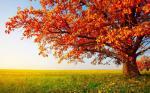25 hình nền phong cảnh mùa thu lãng mạn cho máy tính số 8