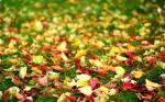 25 hình nền phong cảnh mùa thu lãng mạn cho máy tính số 5