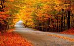 25 hình nền phong cảnh mùa thu lãng mạn cho máy tính số 3