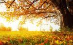 25 hình nền phong cảnh mùa thu lãng mạn cho máy tính số 14