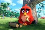 15 hình nền phim hoạt hình Angry Birds 2016 full hd