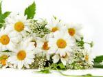 Những bó hoa chúc mừng sinh nhật người yêu dễ thương số 15