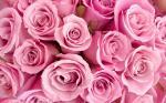 Bộ ảnh valentine 14 2 với những bó hồng kèm hộp quà cực chất số 1