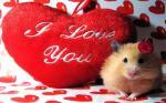 Những hình nền chữ i love you đẹp và ý nghĩa không thể bỏ qua số 8