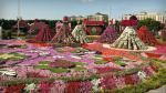 Có diện tích hơn 72.000 m2 vườn hoa Miracle Garden - Điều kỳ diệu có hơn 45 triệu bông hoa luôn khoe sắc, rực rỡ ngay trên vùng đất sa mạc. Nếu bạn để ý sẽ thấy được những bông hoa ở đây khi cạnh nhau sẽ tạo nên các tác phẩm tuyệt đẹp như ô tô hoa, thảm hoa, tạo hình kim tự tháp, hình ngôi sao, trái tim,...