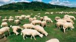 Đồng cừu Suối Nghệ cách Sài Gòn chỉ tầm 70 km nằm trên con đường Phước Tân – Hội Bài, đoạn ngang qua xã Suối Nghệ, huyện Châu Đức. Cánh đồng cừu Vũng Tàu hình thành từ một khu đất trống khô cằn, quanh năm nắng cháy da. Nhưng từ khi có vài hộ dân thả cừu ăn cỏ, cánh đồng cừu bỗng trở thành một địa chỉ du lịch yêu thích của giới trẻ và các cặp đôi chụp ảnh cưới.