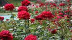 Thung lũng Hoa Hồng đẹp mê đắm tọa lạc ở xóm 1, đường Mường Hoa, thị trấn Sa Pa. Với tổng diện tích khoảng 22ha, thung lũng được tạo thành từ hai dãy núi Hàm Rồng và Fanxipan. Nơi đây trồng vô vàn những giống hoa hồng tạo ra một khu vườn ngập tràn màu sắc và hương thơm. Tới thăm thung lũng Hoa Hồng, du khách có cảm giác như lạc vào một khu vườn cổ tích với hàng trăm ngàn gốc hồng Sa Pa, hồng Pháp, hồng giòn Hoa Kỳ... Theo kinh nghiệm, tháng đẹp nhất để tới đây tham quan, thưởng lãm là từ tháng 11 tới tháng 3 hàng năm, khi hàng trăm gốc hoa thi nhau đua hương khoe sắc tạo ra một bức tranh tuyệt sắc.