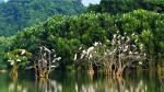 Khu du lịch sinh thái vườn chim Thung Nham cách thành phố Ninh Bình khoảng 12km về phía đông, nằm trọn trong vùng lõi của quần thể danh thắng Tràng An, cạnh khu du lịch nổi tiếng Tam Cốc - Bích Động.Đến Thung Nham, bạn sẽ có cơ hội tham quan Động Vái Giời, hang Bụt, cây đa di chuyển, cây duối nghìn năm,… cùng quần thể hang động, vườn chim, thung lũng tình yêu,…chắc chắn sẽ làm thỏa lòng du khách.