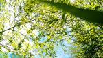 Hình nền máy tính thiên nhiên xanh mát xua tan nắng nóng -16