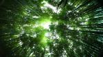 Hình nền máy tính thiên nhiên xanh mát xua tan nắng nóng -19