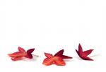 Hình nền powerpoint chủ đề mùa thu đẹp lung linh chất lượng nhất - 10