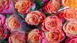 Bộ sưu tập hình nền hoa hồng dành cho máy tính chất lượng cao - 21