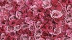 Bộ sưu tập hình nền hoa hồng dành cho máy tính chất lượng cao - 19