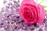 99+ Hình nền hoa hồng tuyệt đẹp cho máy tính