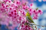 Top 99+ hình nền mùa xuân đẹp nhất 2020