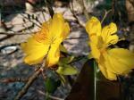 Hình ảnh, hình nền hoa mai đẹp nhất cho ngày tết - Hình 20