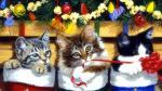 Top hình nền những chú mèo đón noel dễ thương và ngộ nghĩnh - Hình 19
