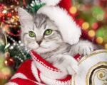 Top hình nền những chú mèo đón noel dễ thương và ngộ nghĩnh - Hình 16