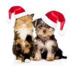 Top hình nền những chú mèo đón noel dễ thương và ngộ nghĩnh - Hình 9