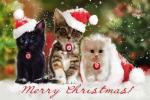 Top hình nền những chú mèo đón noel dễ thương và ngộ nghĩnh