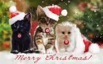 Top hình nền những chú mèo đón noel dễ thương và ngộ nghĩnh - Hình 7