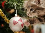 Top hình nền những chú mèo đón noel dễ thương và ngộ nghĩnh - Hình 31