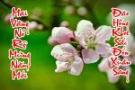 Hình nền câu đối chúc tết Tân Sửutrên nền hoa đào mùa xuân 2021đẹp - Hình 13