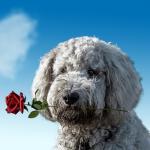 Hình nền zalo tình yêu đẹp nhất, ý nghĩa nhất - Hình 14