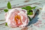 Hình ảnh hoa hồng đẹp dành tặng chị em phụ nữ nhân ngày quốc tế phụ nữ 8/3 - Hình 4