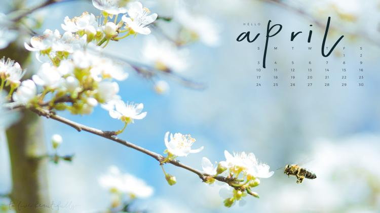 Hình nền tháng 4 02